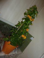 Fleurs et fruits 008.JPG