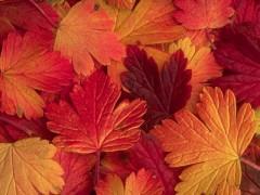automne_joliecarte1.jpg